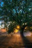 Sun beams thorough trees and greens Stock Photos