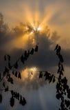 Sun beams thorough trees and greens Stock Image