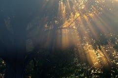 Sun beams thorough trees and greens Royalty Free Stock Image