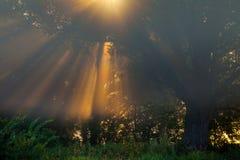 Sun beams thorough trees and greens Stock Photo