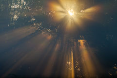 Sun beams thorough trees and greens Royalty Free Stock Photography