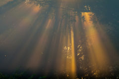 Sun beams thorough trees and greens Stock Images