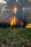 Sun beams thorough trees and greens Royalty Free Stock Photo