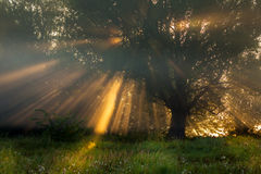 Sun beams thorough trees and greens Stock Image