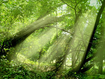 Sun beams through a tropical wood Royalty Free Stock Photos