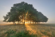 Sun Beams. In the wood Royalty Free Stock Photography