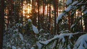 Sun in beautiful winter snowy forest stock video footage