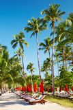 Sun beds on tropical beach Stock Image