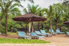 Sun beds and sun umbrellas to tourists royalty free stock image