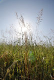 Sun behind the big grass. Stock Images