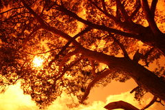Sun behind a big tree Stock Photos