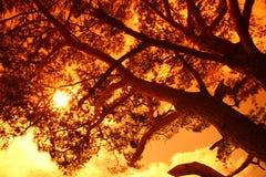 Sun behind a big tree stock photos