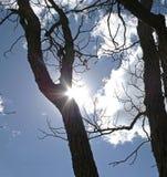 SUN BEHIND EDGE OF TREE TRUNK Royalty Free Stock Photo