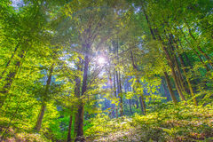 The sun behind the forest Royalty Free Stock Image