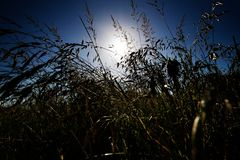 Sun behind the grass. Stock Images