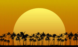 Sun Behind Palm Trees Stock Photos