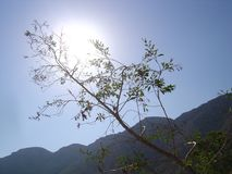 The sun behind a thin branch stock photo