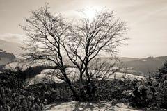 Sun behind the tree Stock Photo