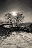 Sun behind the tree. On hills of Dolny Kubin city in winter Stock Images