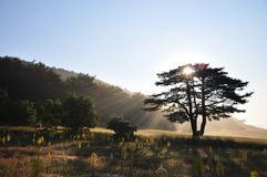 Sun behind tree Stock Photo