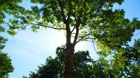 Sun behind the Tree Stock Photos