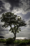 Sun behind a tree on a beach in Big Island, Hawaii Stock Images