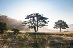 Sun behind tree Royalty Free Stock Photography