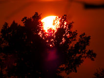 The sun behind the tree Royalty Free Stock Images