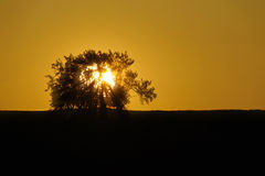 Sun behind a tree Royalty Free Stock Photos