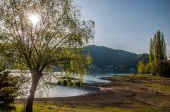 Sun behind a tree in Kawakuchigo lake. Sun behind a tree in Kawakuchigo lake in the morning Royalty Free Stock Images