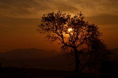 Sun behind the tree. Orange sunset behind the silhouette of a treen Royalty Free Stock Photography