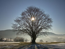 Sun behind tree in winter Stock Image