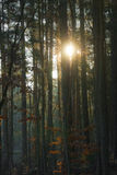 Sun behind trees. Mixed woodland in morning sun Royalty Free Stock Photos