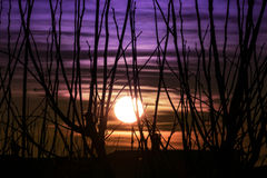Sun behind trees Royalty Free Stock Images