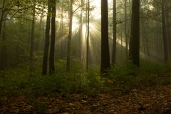 The sun behind the trees. Forest morning fog with the rays of the Sun stock photography