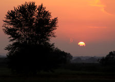Sun bei Sonnenuntergang mit Baum Stockbilder