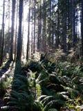 Sun beijou a floresta Foto de Stock Royalty Free