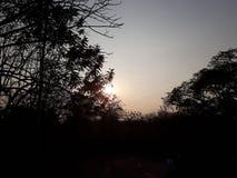 Sun beijou a manhã foto de stock royalty free