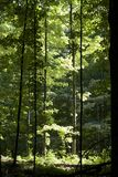 Sun beleuchtete Bäume im Wald Stockfotos