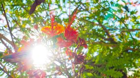 Sun-Beleuchtung überlebte den netten Schuss des Blumenfeldes Lizenzfreie Stockfotos