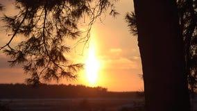 Sun belichtet Niederlassungen der Fichte, brennenden Sonnenuntergang im Winterwald, funkelnde Schneeflocken der Sonne, Winterland stock video footage