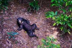 Sun betreffen Borneo-Waldboden Stockfotografie