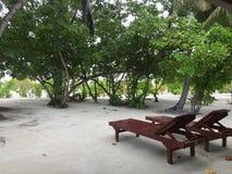 Sun-Betten auf exotischem Strand mit Bäumen Stockfoto