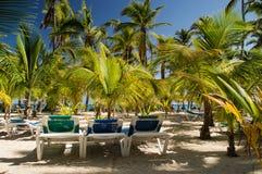 Sun-Betten unter den Palmen mit einem klaren blauen Himmel stockfotos