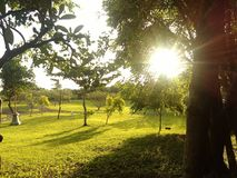 Sun is beutiful. Nature bali nice Royalty Free Stock Photos