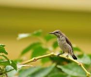 Sun-bird Stock Images