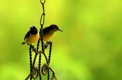 Sun-Bird Couple Royalty Free Stock Images