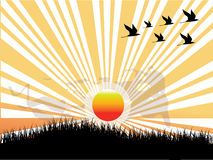 Sun,bird and grass. Image of sun,Flock of birds and grass Stock Photo
