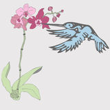 Sun bird and orchid Stock Photography