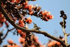 Sun bird stock photos
